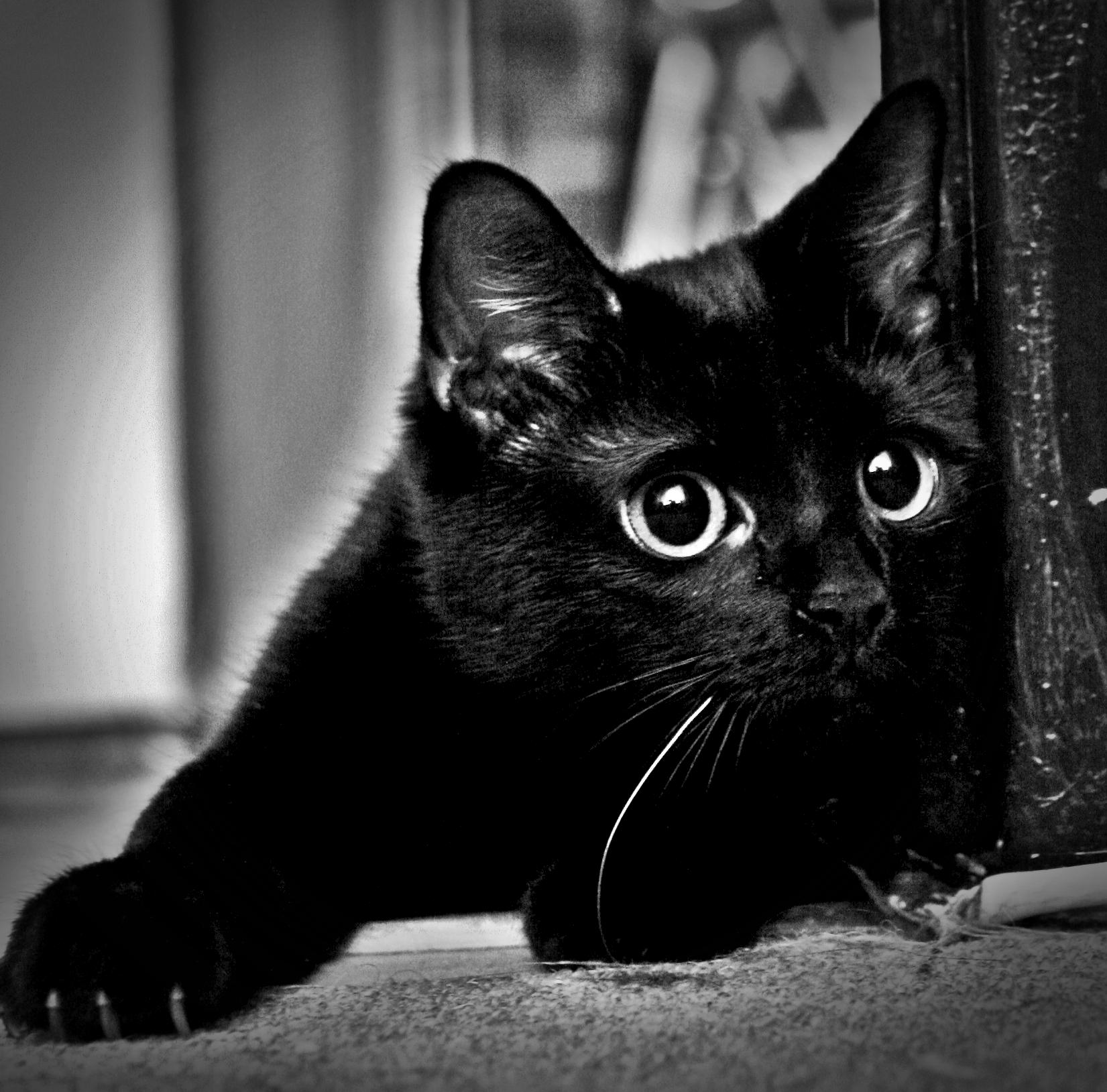 Чёрные киски фото 22 фотография